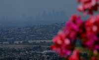 Haze of L A from Rose Hill in Whittier